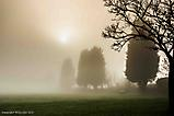 Foggy Day in Northcliffe Park_1